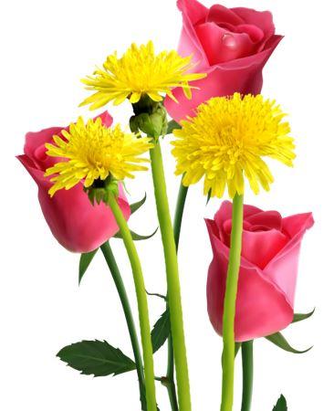 Rosen und 'Saublumen'